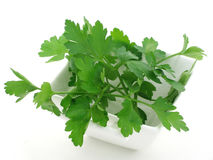 Bowl of parsley. A china bowl of parsley stock photo