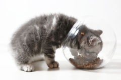 Bowl of pet food Stock Images