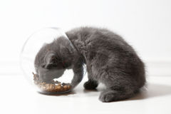 Bowl of pet food Royalty Free Stock Photo