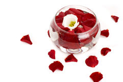 Bowl with petals Stock Photography