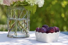 Bowl with plums in the garden Royalty Free Stock Photo