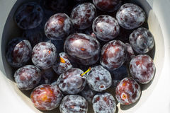 Bowl of plums in water Royalty Free Stock Photography