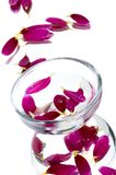 bowl with purple flower Stock Photo