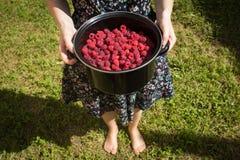 Bowl of raspberries held by woman Royalty Free Stock Image