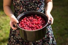 Bowl of raspberries held by woman Royalty Free Stock Photo