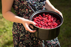 Bowl of raspberries held by woman Royalty Free Stock Images