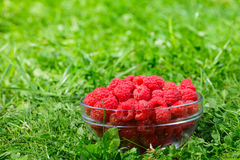 Bowl of raspberries outdoor Royalty Free Stock Image