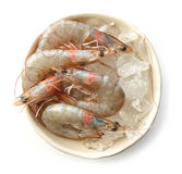 Bowl of raw prawns. And ice isolated on white background, top view Stock Photography