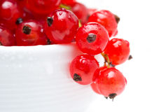 Bowl of red currant isolated, selective focus Stock Image