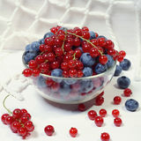 Bowl of red currants and blueberries. Stock Photo