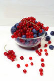 Bowl of red currants and blueberries. Stock Photos