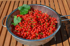Bowl with red currants Royalty Free Stock Photo