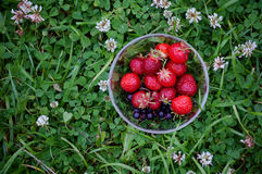 Bowl with red strawberries. On a background of green clover royalty free stock image