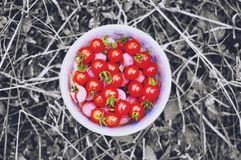 Bowl of Red Tomatoes Stock Photos