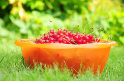 Bowl of redcurrant Stock Photography
