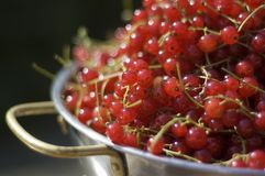 Bowl of redcurrants. Silver bowl of pan full of ripe redcurrants Royalty Free Stock Photos