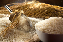 Bowl Of Rice. Rice in the bowl with scoop and spike of rice Stock Images