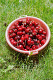 Bowl with ripe red cherries Royalty Free Stock Photo