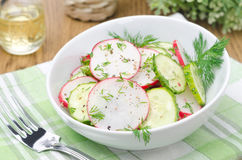Bowl of salad with cucumber, radish and dill Stock Images