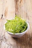 Bowl of salad greens Royalty Free Stock Image