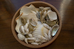 A bowl of sea shells Royalty Free Stock Images