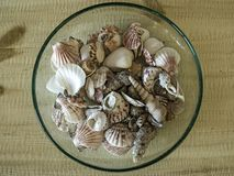 A bowl of sea shells. On a wooden table Stock Images
