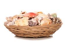 Bowl of seashells house decoration Stock Image