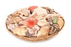 Bowl of seashells house decoration Stock Images
