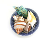 Bowl of shells. Stock Photography