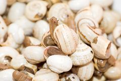 Bowl of snails in garlic, typical plate of Spain and France Royalty Free Stock Photos