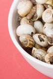 Bowl of snails in garlic, typical plate of Spain and France Stock Photos