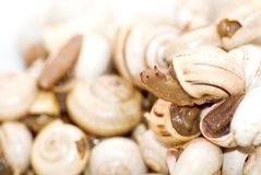 Bowl of snails in garlic, typical plate of Spain and France Royalty Free Stock Photography
