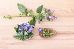 Bowl and spoon with starflower. Top view of Bowl and wooden spoon with Borage on a wooden background Stock Images