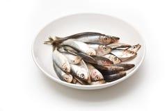 Bowl of fish Royalty Free Stock Image