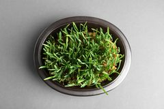 Bowl with sprouted wheat grass seeds on grey background. Top view royalty free stock images