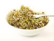 Bowl with sprouts, isolated. Healthy portion of germs served in the white bowl Stock Photos