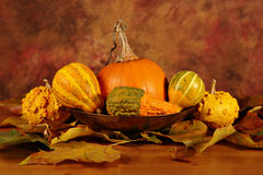 Bowl of squashes with dried leaves Royalty Free Stock Image