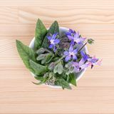 Bowl with starflower. Top view of a bowl with Borage  on a wooden board Stock Image