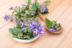 Bowl with starflower. Bowl and wooden spoon with fresh Borage Stock Photography