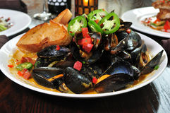 Bowl of Steamed Mussels royalty free stock image