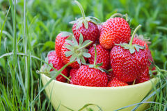 Bowl of strawberries on grass Stock Images
