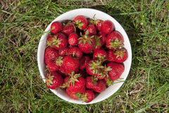 Bowl with strawberries on a grass Stock Image