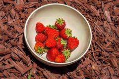 Bowl of strawberries on wood mulch stock image