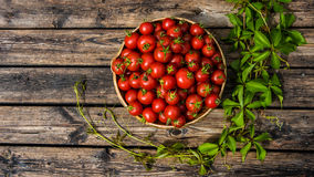 Bowl of tomatoes on grainy wooden boards. Bowl of red ripe tomatoes on a surface composed of old grainy wooden boards. A green creeping plant is growing (placed Royalty Free Stock Photography