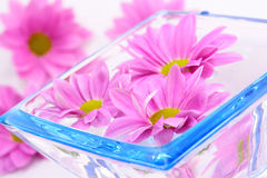 Bowl of water. And pink flowers on white Royalty Free Stock Photography