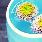 Bowl of water and flowers Royalty Free Stock Image