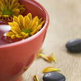 Bowl of water and flowers Royalty Free Stock Photos