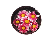 Bowl of water with flowers. Black bowl with water and pink flowers royalty free stock photos