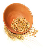 Bowl of wheat Stock Image