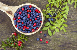 Bowl of wild berries Royalty Free Stock Photography